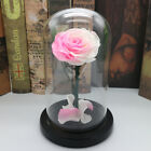 Forever Rose Flower Festive Preserved Immortal Fresh Rose in Glass Best Gifts