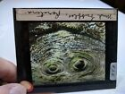 HISTORIC Colored Glass Magic Lantern Slide EAE MAORI RORATURA MUD BUBBLES