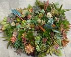 15 Organic Succulent Cuttings all different Quick Ship