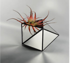 Geometric MIRROR TERRARIUM 13 Plated Glass Triangles 8 x 13 x13 Vase Flowers