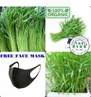 100 gam 2500 Seeds Water Morning Glory Water Spinach Ong Choy Rau muong + GIFT