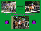 CALIFORNIA CHROME Horse Racing TRIPLE CROWN Near Miss 8 by 10 Collage Photo