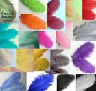 10 OSTRICH 6 8 Genuine Feathers Quills CHOOSE COLOR 15 20cm Drabs Plumes