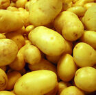 FRESH POTATOES PHOTO QUALITY 12X12 SCRAPBOOK CARDSTOCK 2 SHEETS