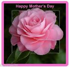 Happy Mother's Day Pink Rose Gift Card Insert Refrigerator Magnet