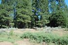 A 99 acre Lot in Northern California at CAL Pines Financing Available Terms