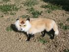 Realistic Lifelike Fox Rabbit Goat Fur Furry Animal F624