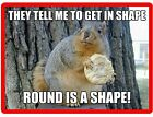 Funny Squirrel In Shape Refrigerator Tool Box Magnet Gift Card Insert