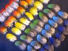 50 Multi Colored Parrot Feathers Macaw Bird Fly Tying
