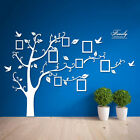 New Family Tree Bird Wall Sticker Photo Picture Frame Removable DIY Room Decal