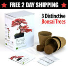 Bonsai Tree Starter Planter Seed Kit Everything Needed To Grow 4 Japanese Trees