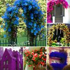 100 Pcs/bag Perfume Rainbow Climbing Flower Seeds Coulourful Rock Cress For Home