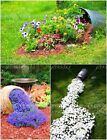 HOT 100 Pcs/bag Rock Cress, Aubrieta Cascade Purple FLOWER SEEDS For Home Garden