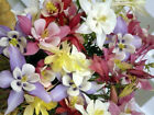 COLUMBINE MIX 200 SEEDS ALL KINDS AND COLORS AQUILEGIA GREAT SHADE FLOWERS