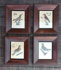 Bird Prints Antique Engraved 1800s Hand Colored Set of 4 Matching Frames w Glass