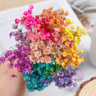 DIY Crafts Natural Plants Floral Bouquets Dried Flowers Mini Daisy Small Star
