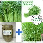 1500 Seeds Water Morning Glory Water Spinach Rau muong + 50 gam Dried Bay Leaves