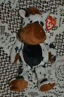 ty Tipsy/ Cow/ Beanie Baby/ Beanie Babies Collection/ Original/ TAG ERROR