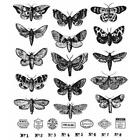 Tim Holtz Cling Rubber Stamps Moth Study CMS436