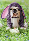 Dog In Bunny Suit Funny Bulldog Easter Card Greeting Card by Avanti Press