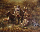 The Lionesses, Original Wild Life Handmade Oil Painting on Canvas Art, 36