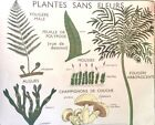 Botanical French Vintage School Poster Garden Art Leaf Leaves Plant Stem Tree