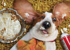 Dog With Empty Pie Tin Funny Basset Hound Thanksgiving Card by Avanti Press