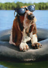 Basset Hound Wearing Sunglasses Funny Dog Birthday Card by Avanti Press