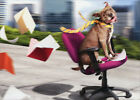 Dog Office Chair Fun Funny Retirement Card Greeting Card by Avanti Press