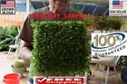 HUGE BIG glossostigma Mat carpet wall Easy Aquarium aquascaping planted tank