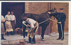 Tuck's 2nd Life Guards  series - Farrier Shoeing  (unused)