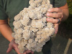 Bonsai Suiseki Natural Gobi RockDesert Rose Stone Wonderful Viewing JJ308