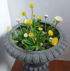 Artificial Yellow And White Mini Small Flower Grass Landscape Set of 4
