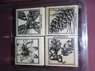 Stampin Up Close to Nature wood mount rubber stamp set