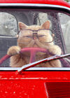 Cat Driving Car Funny Birthday Card Greeting Card by Avanti Press