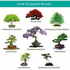 Bonsai Starter Kit Everything You Need To Grow 8 Colorful Bonzai Trees