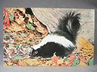 Striped Skunk photographic postcard by Nature Press Post Cards