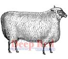 Deep Red Stamps Wooly Sheep Rubber Cling Stamp