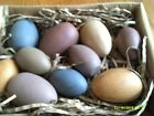 Primitive Country Wooden Distressed Pastel Easter Eggs Box of 10