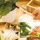 Set Spade Shovel Mini Potted Plant Pipping Planting Gardening Tools Succulents