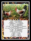 ROOSTER  HEN MAGNET KITCHEN MEASUREMENT GUIDE 5 x 7