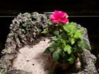 Handmade Cement Succulent Bonsai Planter Pot Flower Pot Decor 12x12