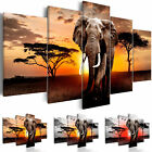 Canvas Print Elephant Framed Wall Art Picture Photo Image g C 0054 b n