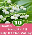 Lily of the Valley Herb Cut and Sifted 100% Organic Dr Sebi