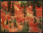 Fall Season Trees Forest Change of Season Large Blank Greeting Note Card