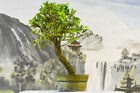 Tenacious TEXAS CEDAR ELM Pre Bonsai Tree is Cold Hardy w Gnarly Bark