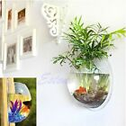 Plant Wall Hanging Mount Bubble Aquarium Bowl Fish Tank Aquarium Home Decoration
