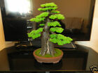 Artificial Pine Bonsai Tree Very Realistic Hand Made Japanese Chinese Bonzi