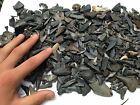 Lot of 20 Shark Teeth Megalodon Mako Tiger Angustidens Great White necklace Bull