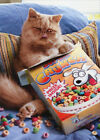 Cereal Cat Pop Up Stand Out Funny Birthday Card Greeting Card by Avanti Press